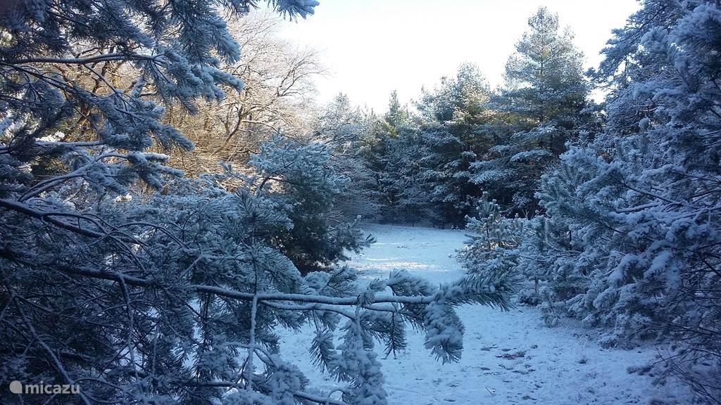 Ook in de winter is het prachtig in de bossen!
