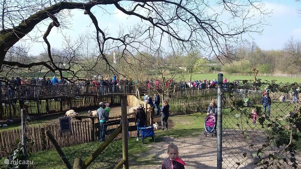 Demonstraties met roofvogels in de dierentuin van Nordhorn