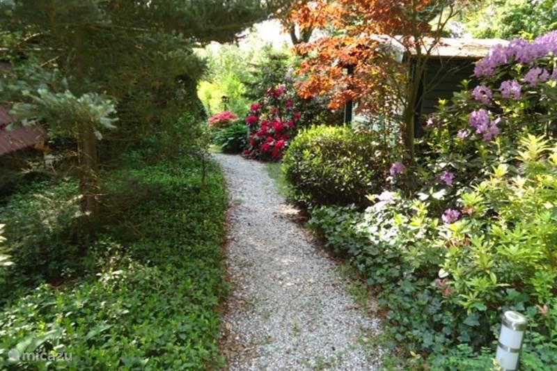 Vakantiehuis Nederland, Gelderland, Harfsen Bungalow Bos en Heide
