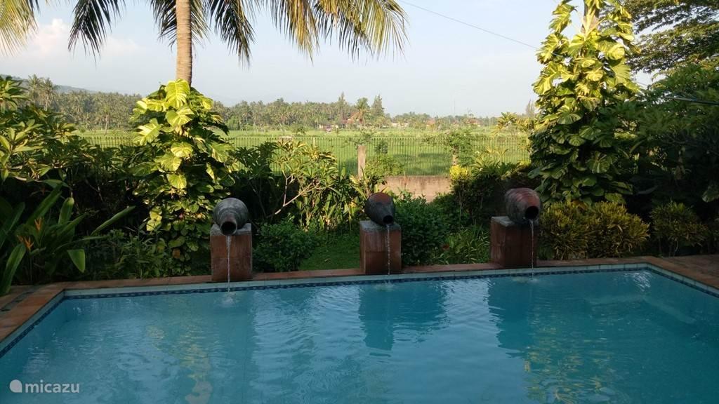 uitzicht vanaf zwembad naar de rijstvelden