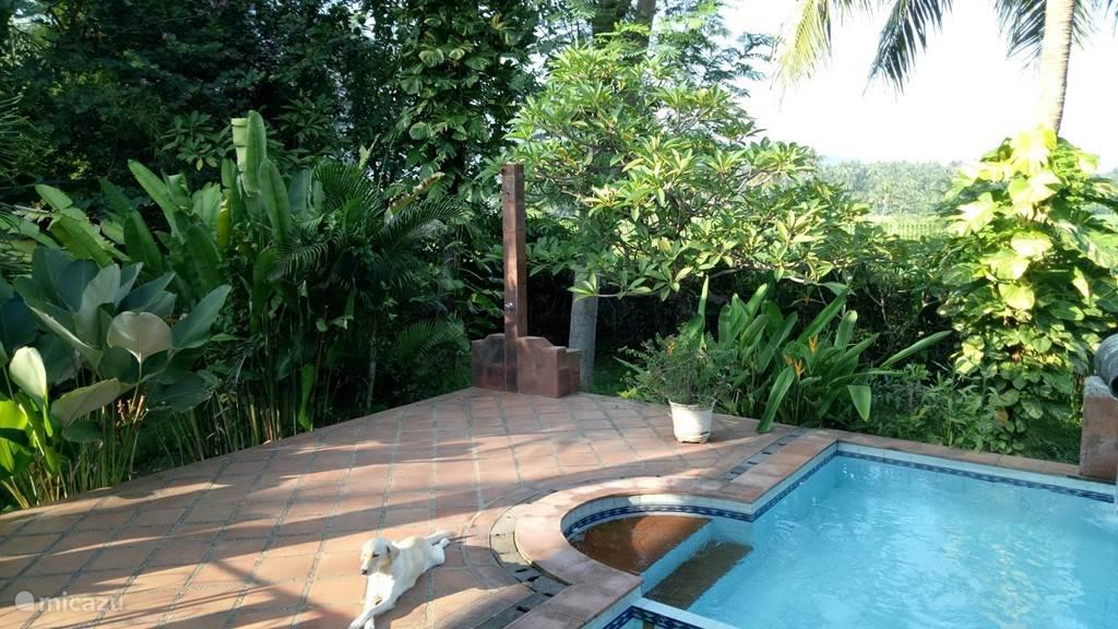 villa Mimosa pool deck