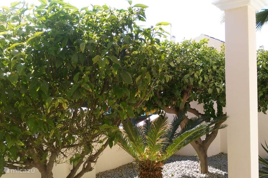 Fruit bomen