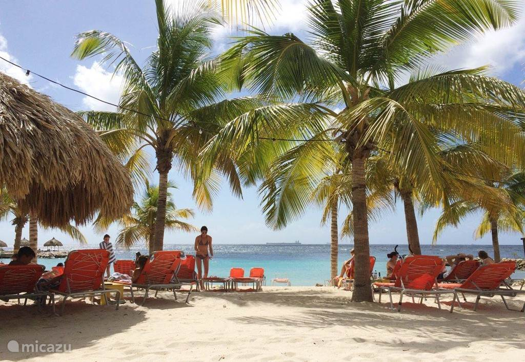 Blue Bay Beach on one of the many sunny days with palm trees, drinks and snacks within reach.