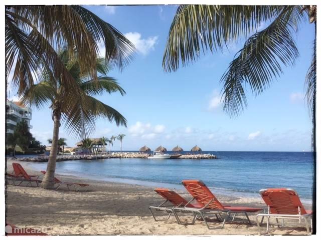 Het Palmenstrand van Blue Bay Beach & Golfresort; luxueus genieten onder een palmboom!