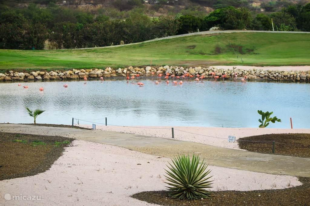Achter het zwembad ligt de golfbaan en je ziet daar de flamingo's praktisch elke morgen aan het ontbijt op zoek naar voedsel in het ondiepe water.