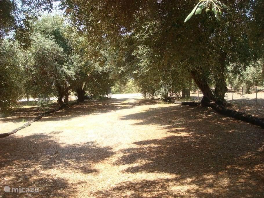 De ingang van de olijfgaard.