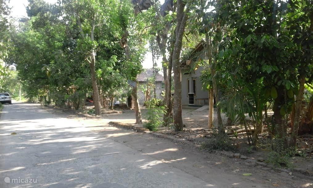 De villa staat midden in een rustige traditionele Indonesische Kampung. Heel bijzonder en prachtig voor wandelingen vanwege de mooie rijstvelden om ons heen