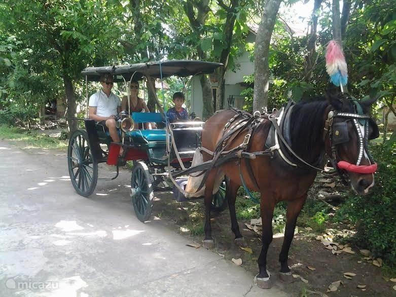 Maak een leuke rit met paard en wagen door onze kampung en rijstvelden