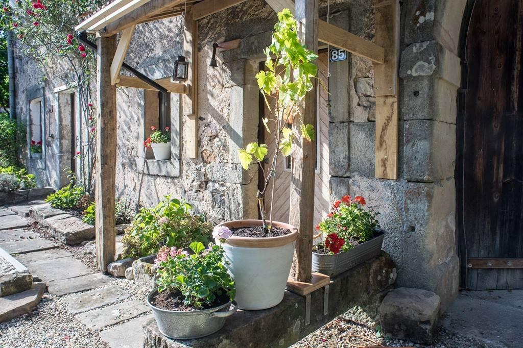 Druif en geraniums, comme il faut