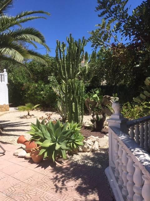 Zeer mooie Cactussen