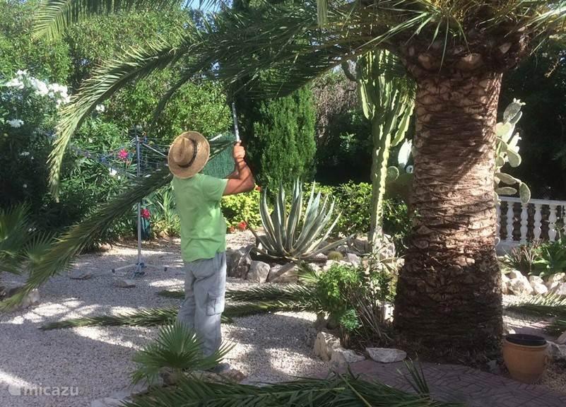 Tropische tuin in onderhoud door eigen tuinman