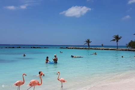 Ferienwohnung Aruba, Oranjestad, Oranjestad studio NEW Lagoon Studio 1, zu Fuß zum Meer