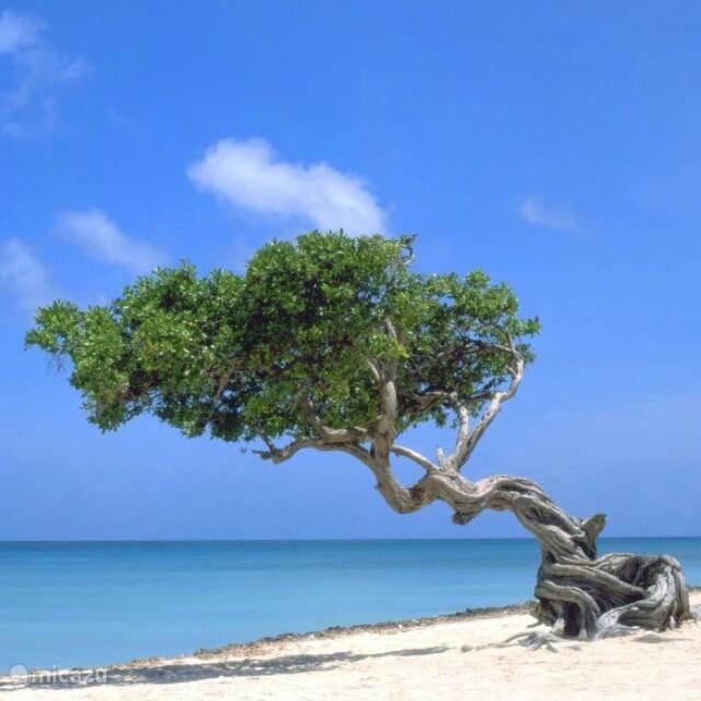Vakantiehuis Aruba, Oranjestad, Oranjestad Studio NEW Lagoon Studio 1, lopend naar zee
