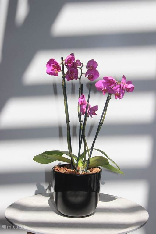 Orchid on terrace