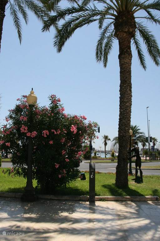 boulevard in Alicante