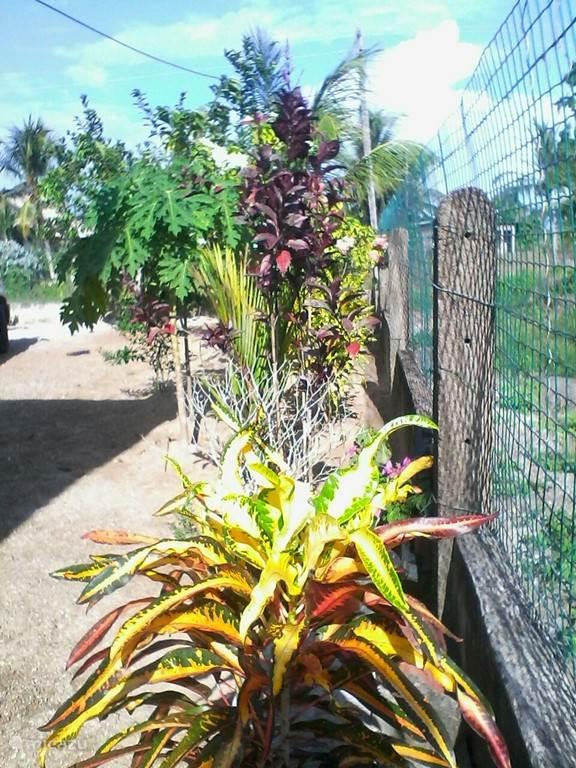 Mooie bloemen en planten