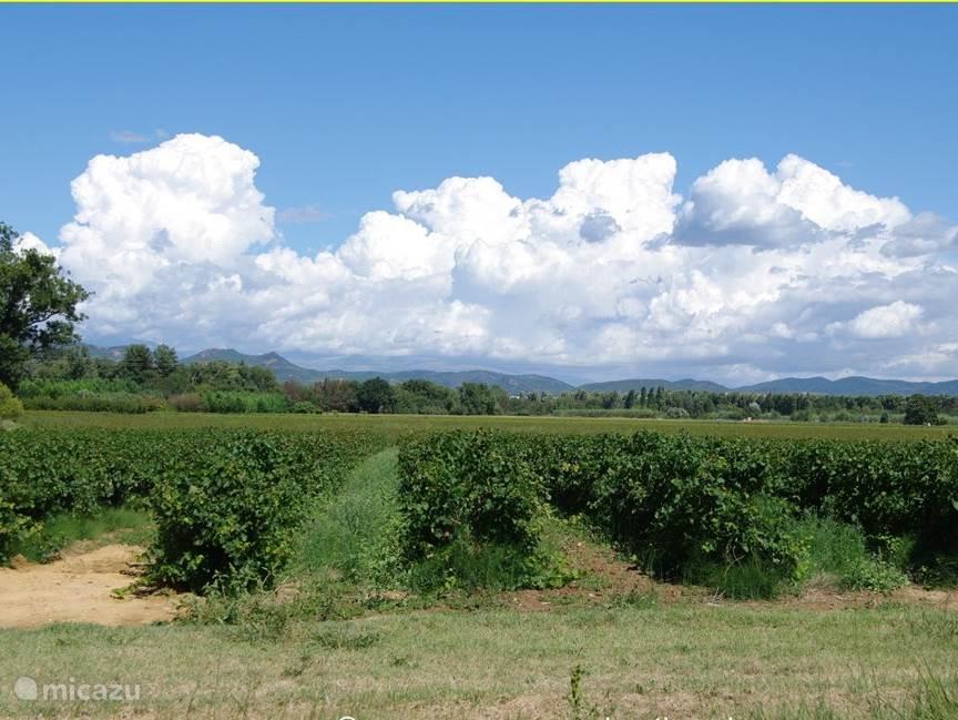De wijnvelden in de Provence