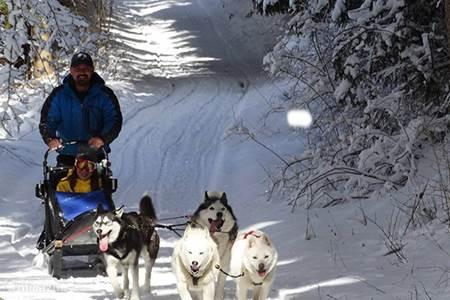Husky sleigh rides