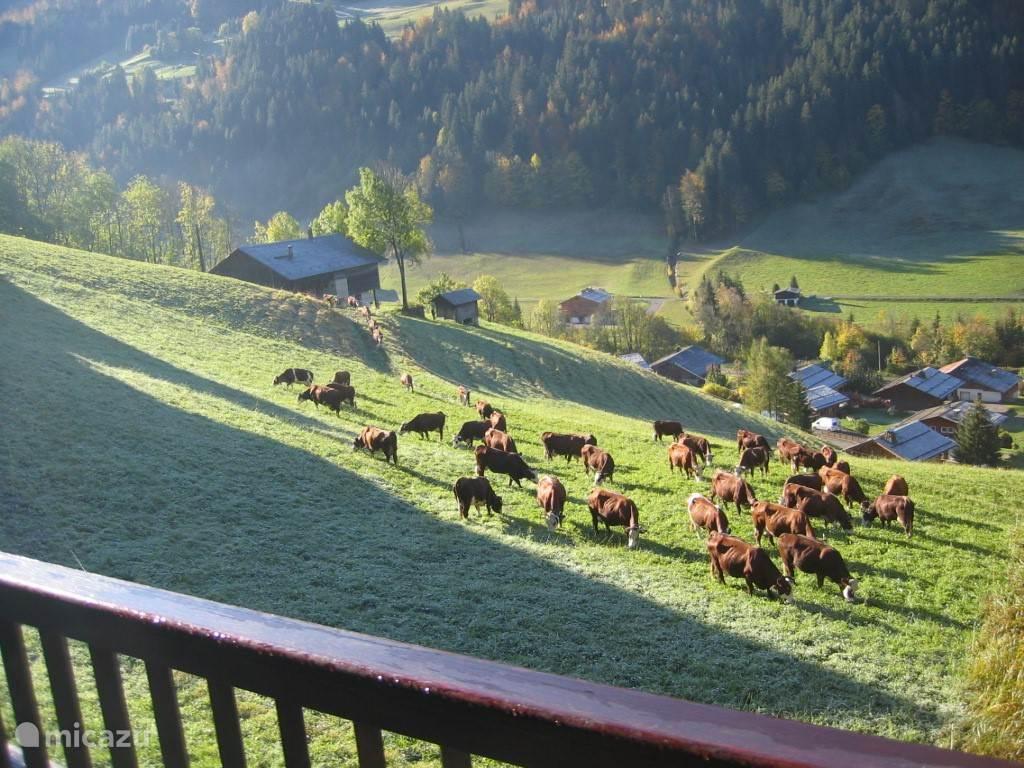 Soms staan er koeien voor in de wei. Foto genomen vanaf het balkon.