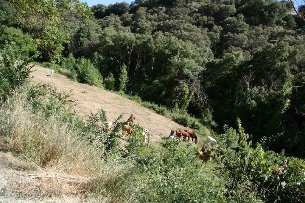 Het uitzicht over de landerijen waar schapen en soms paarden grazen. En met een ultieme rus