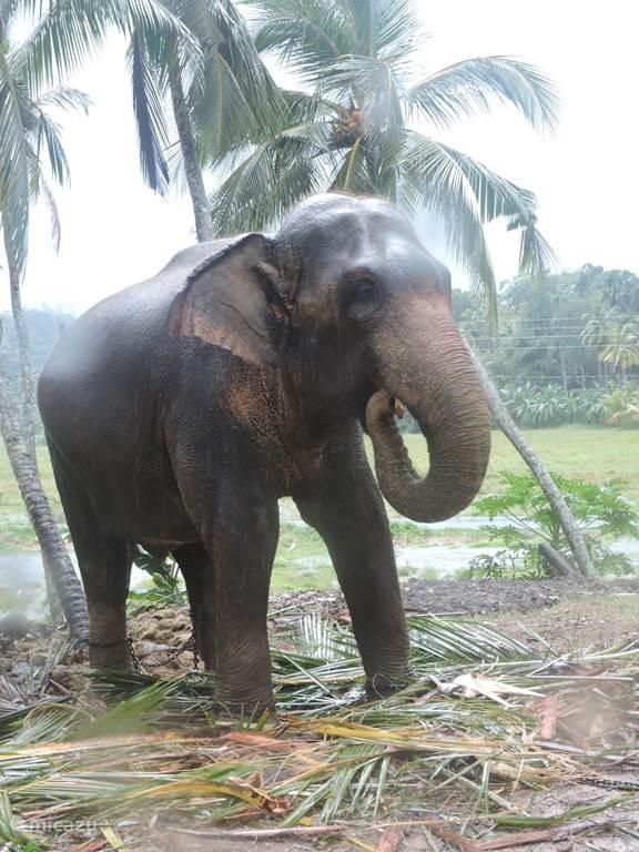 olifanten bij de tempel