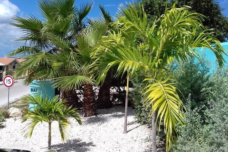 Vakantiehuis Curaçao, Banda Abou (west), Fontein Villa Cas Bon Bini - met zwembad