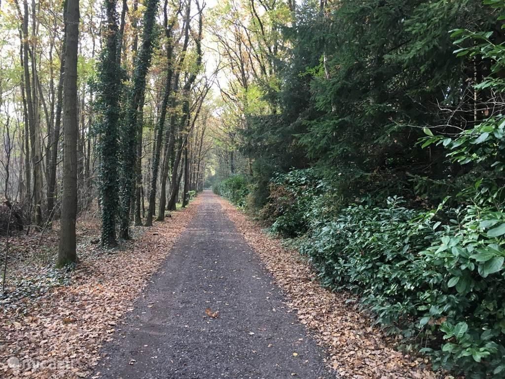De weg naar het boshuisje is al prachtig