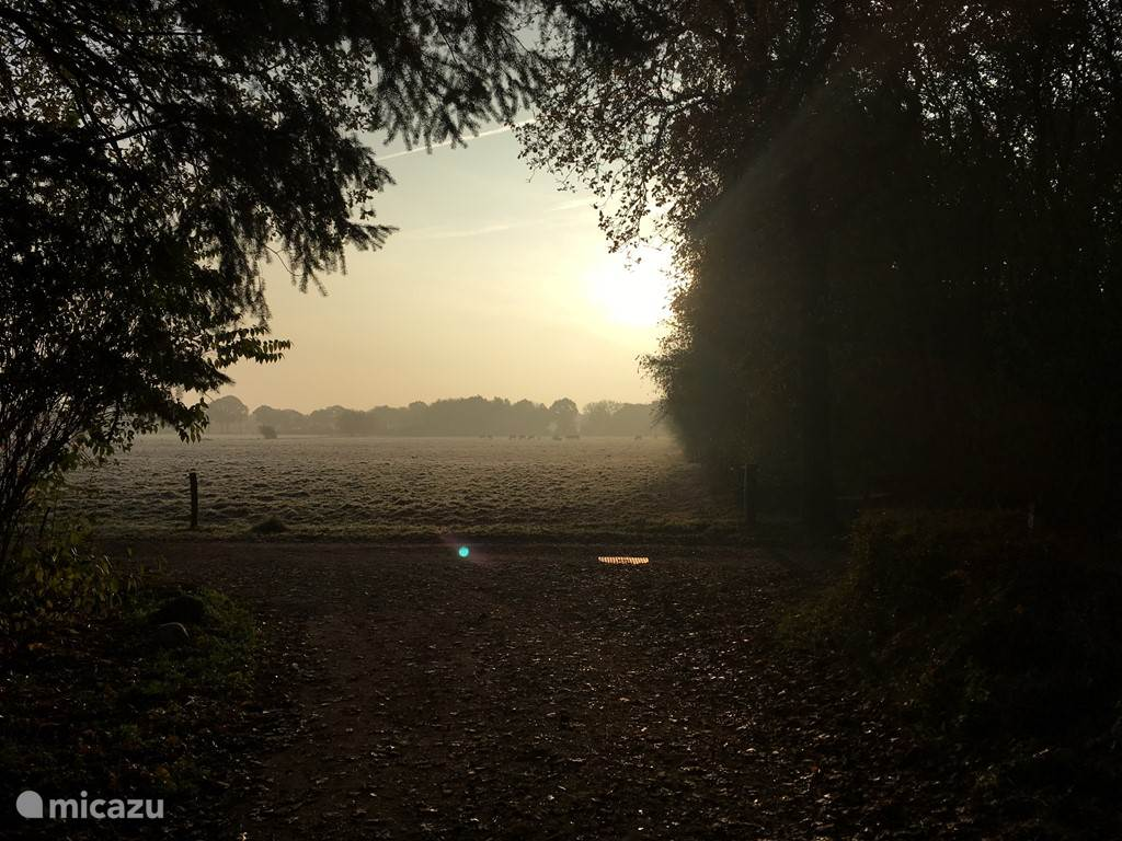 De zon komt op aan het eind van het bospad