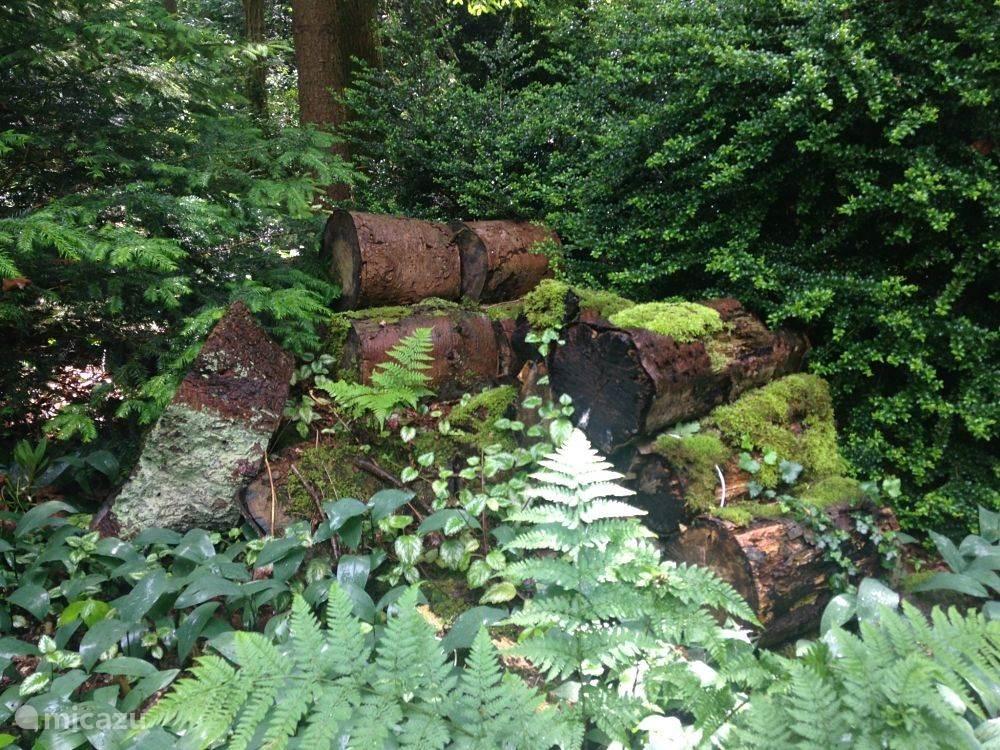 Natuurkunst in de tuin