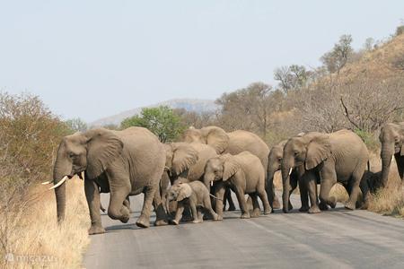 Wildlife in het Krugerpark