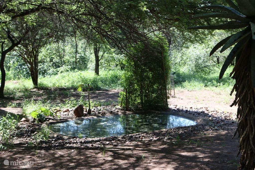 Drinkpool in de tuin waar de dieren komen drinken
