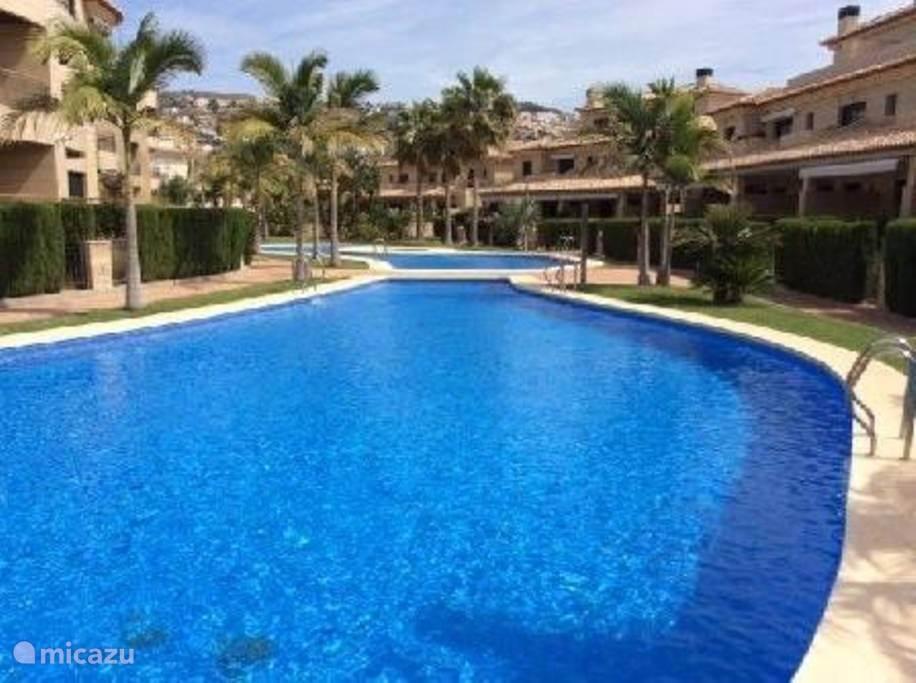 Zwembad met mooi aangelegde tuin