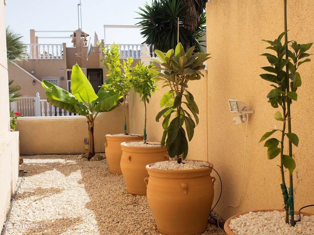 De tuin aan de zijkant van het huis met banaan, mandarijn, citroen, etc