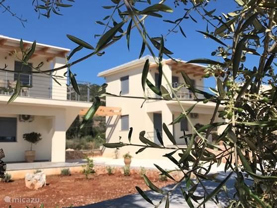 Uiteraard ook hier een olijfboom!