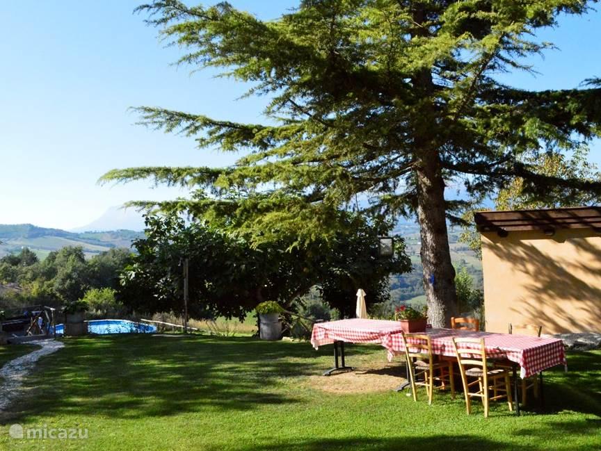 gedeelte tuin met zwembad