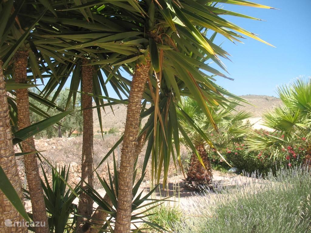 prachtige tuin met palmen en fruit en noten bomen