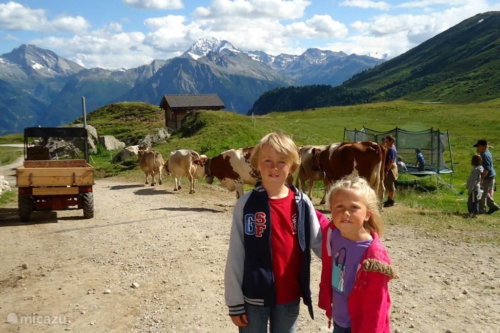 Onze kids temidden van de  koeien op hun dagelijkse route naar de stal