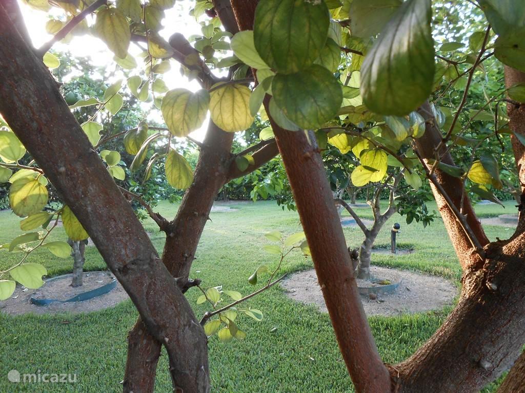 fruit boomgaard