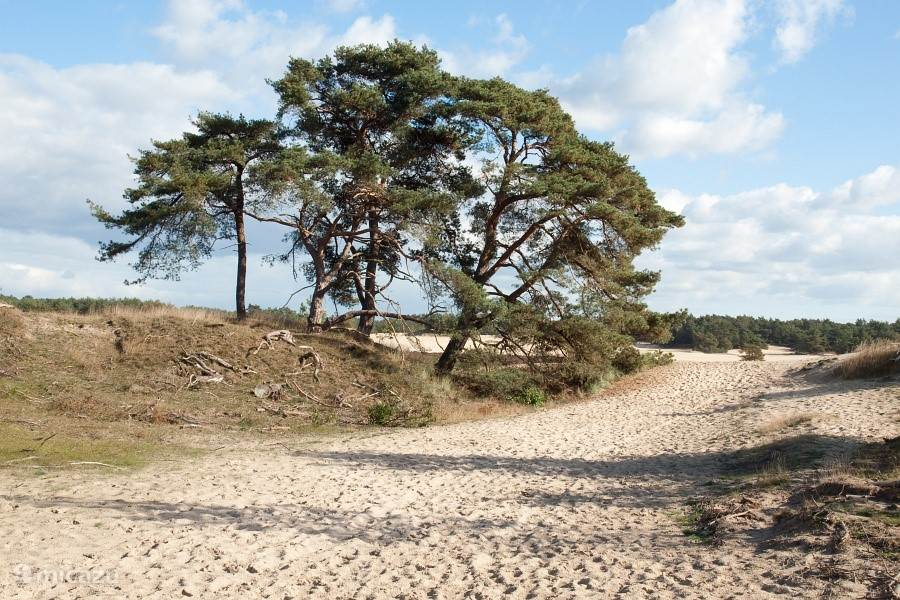 Hulshorst