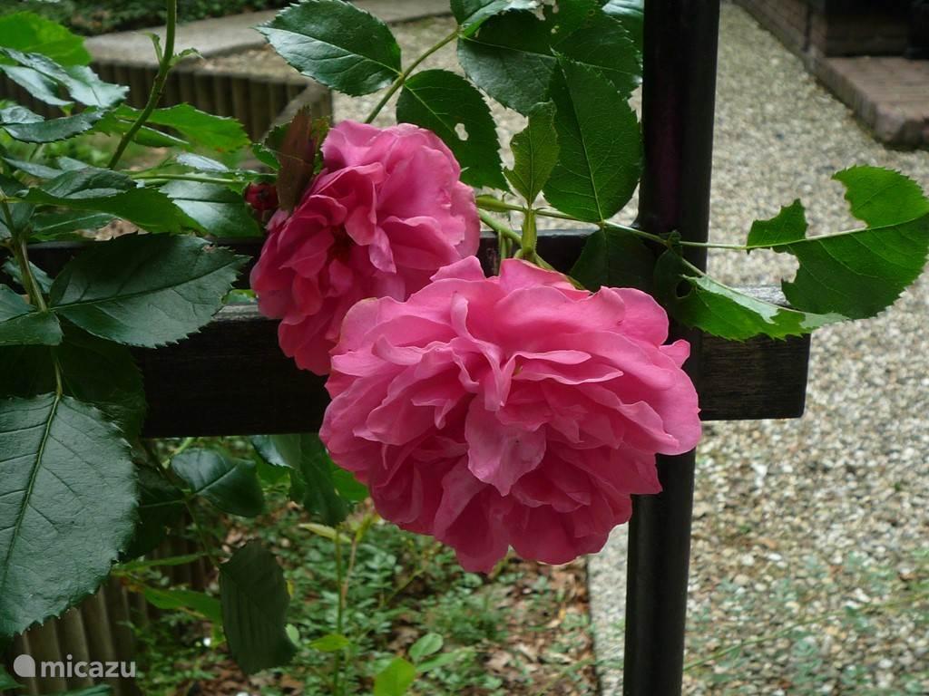De rozen van Doornroosje