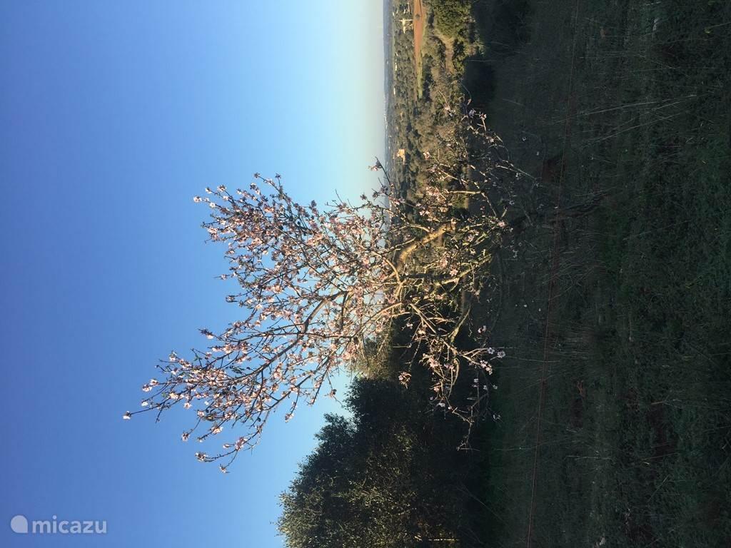 12 januari 19 graden en de natuur barts uit zijn voegen