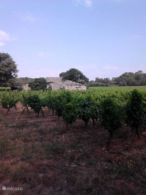 One of the many vineyards!