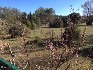 Uitzicht vanaf het terras in de lente (Maart)