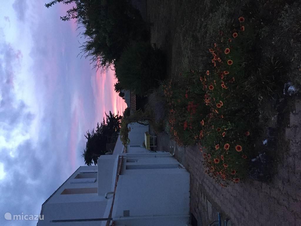 The garden at dawn.
