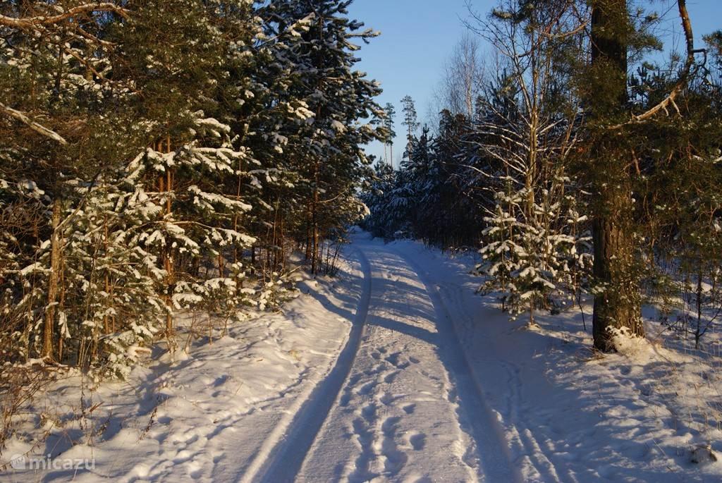 Vergeet niet van de wandeling door het bos te genieten!