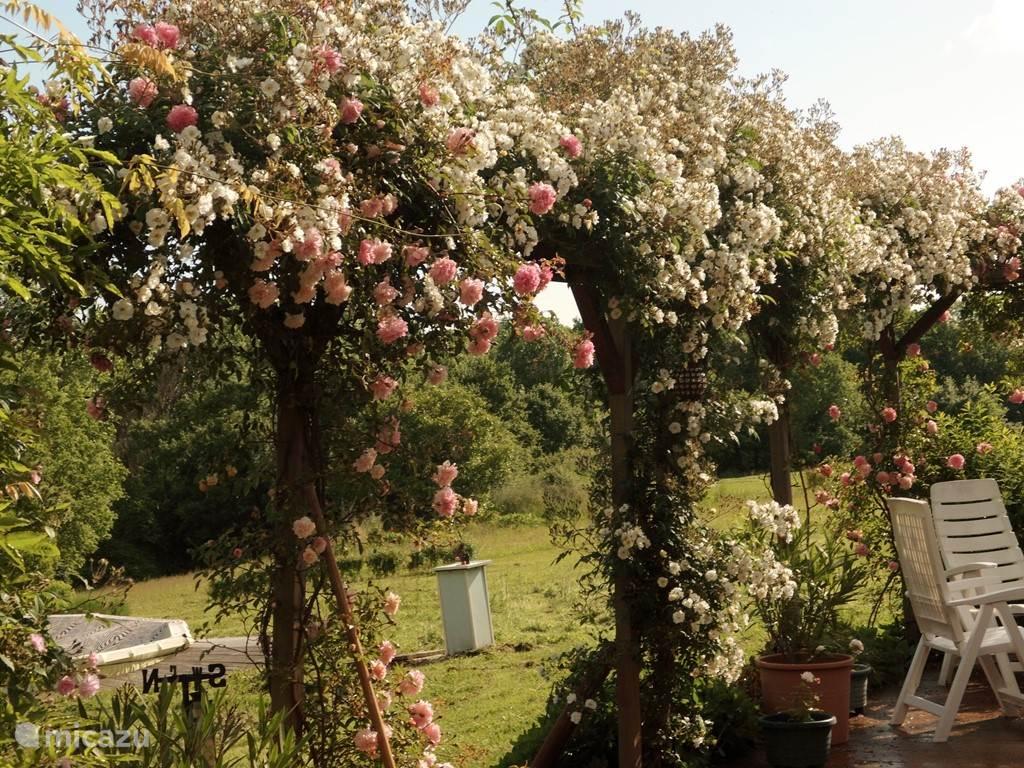 Pergola met diverse soorten rozen
