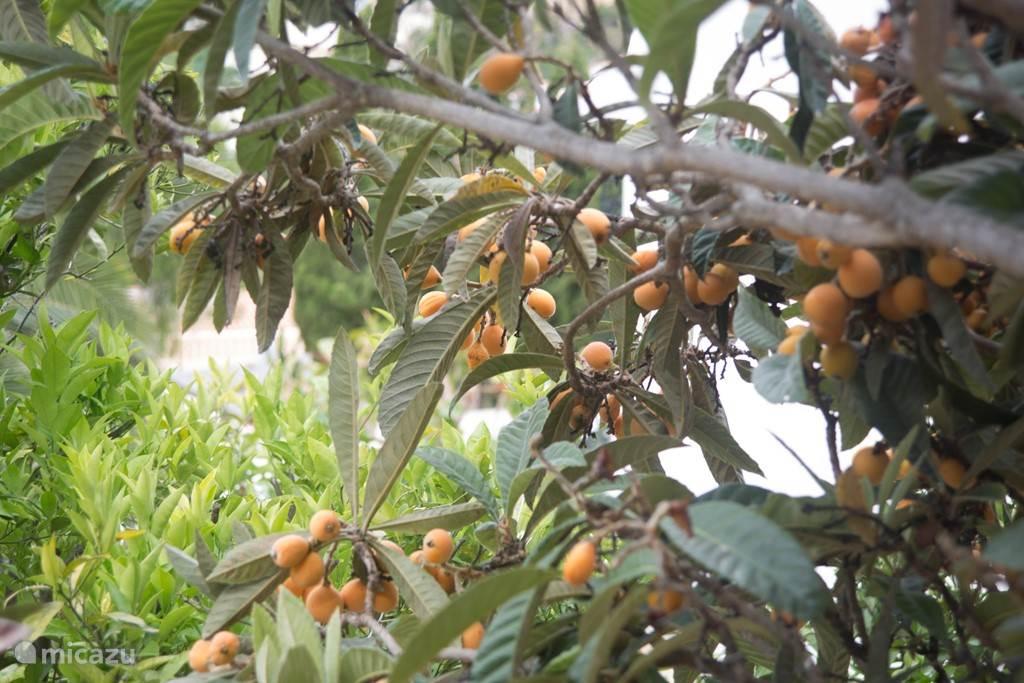 Diverse fruitbomen