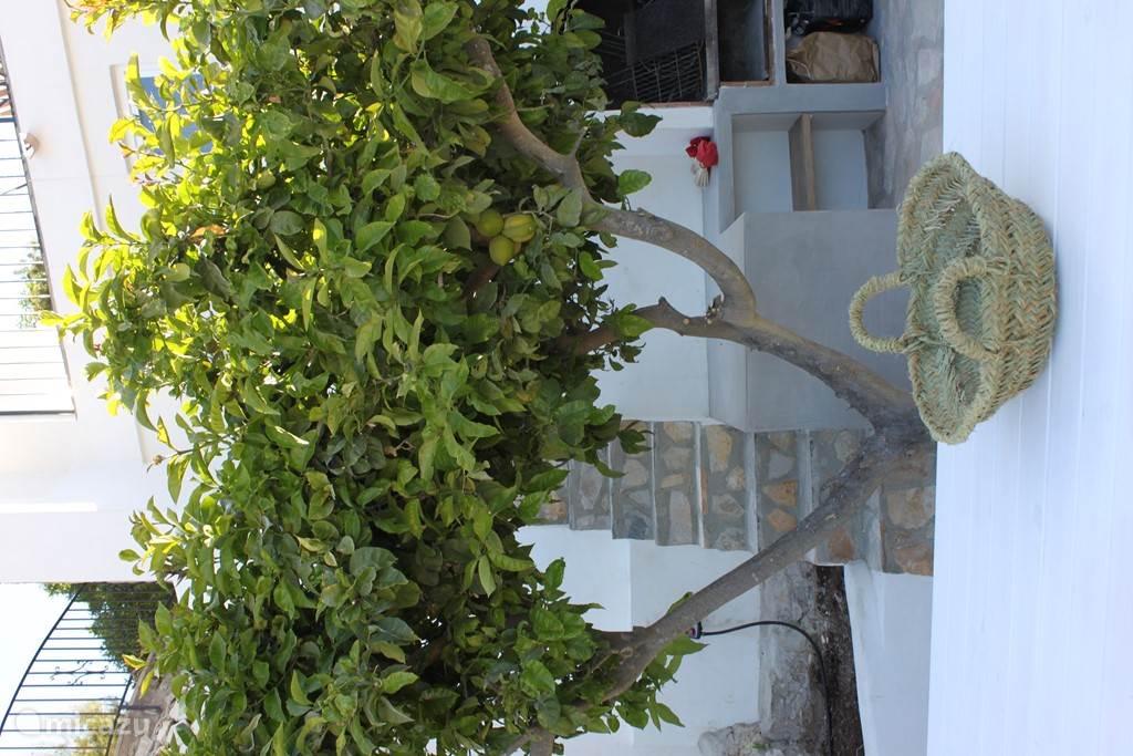 BBQ met citroenboom op terras
