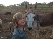 onze ezel
