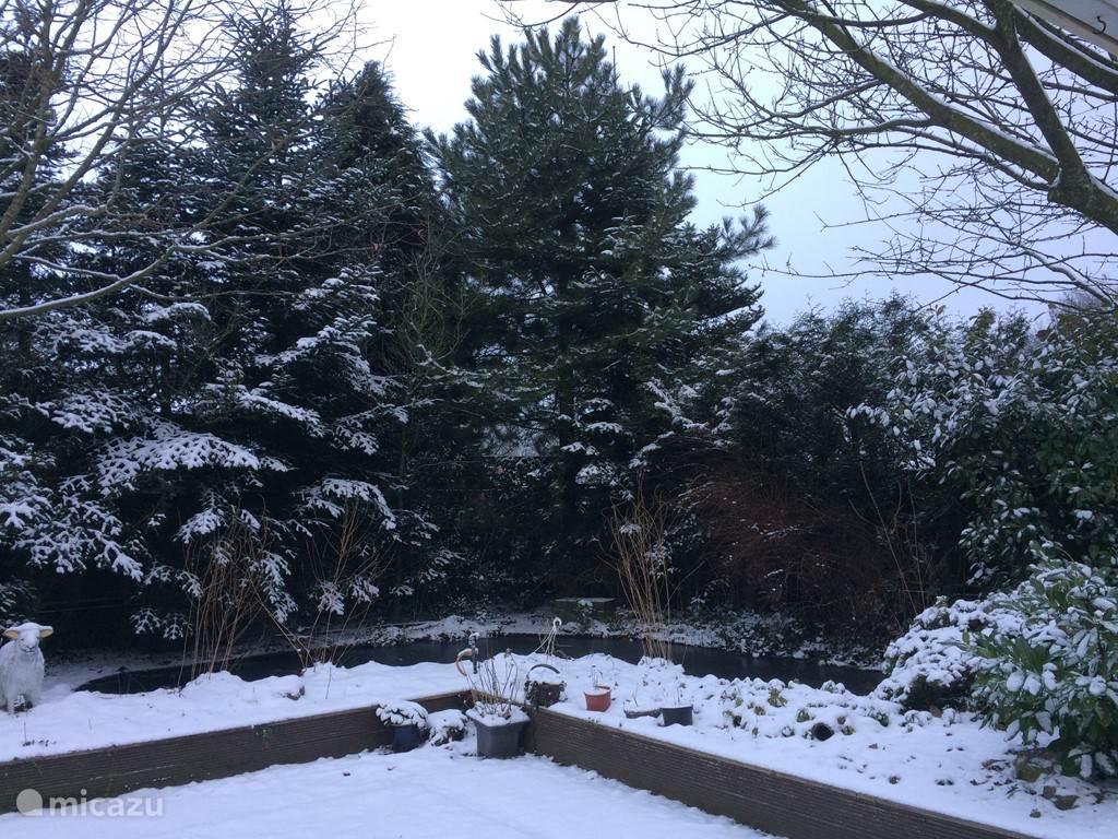 Achtertuin in de winter